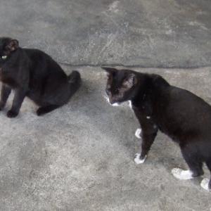 猫の喧嘩に乱入する