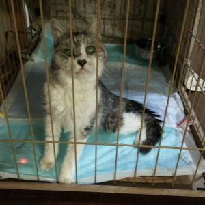 飼育崩壊は免れたけどかなり大変だった猫の多頭飼育。