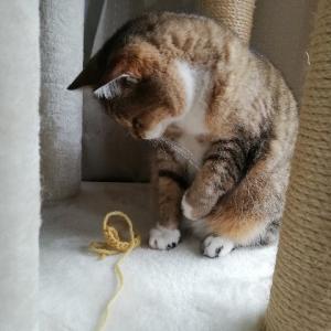 毛糸も好きなんだね。