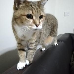 猫の日のさんぽ。