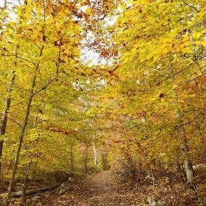 《NYの秋》トレイル&ファーム