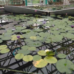 雨の日は植物園。