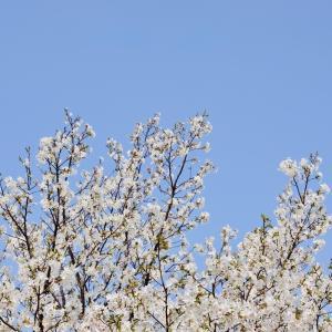 西洋のイースター、日本の春のお話