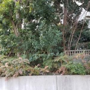 小石川パークタワー内にあるパワースポット「極楽水」と「弁財天」