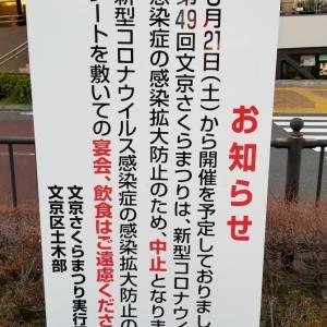 播磨坂の「文京さくらまつり」は今年は中止になりました