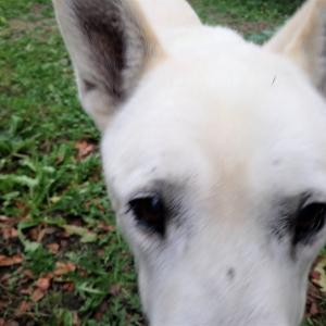 犬挨拶を下手にする方法