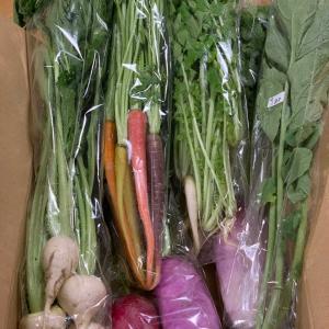 珍しい野菜の農家さんの店オープンとマーライオン娘🙀。