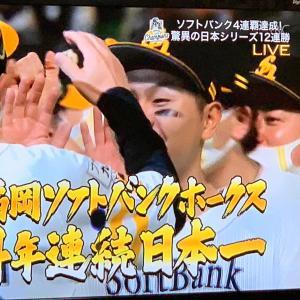 日本一のブラジャー🤣。ソフトバーゲンホークス❓😱