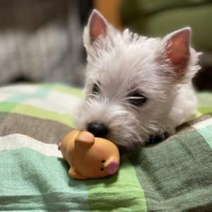 キタキター‼️我が家に犬がやって来たAgain