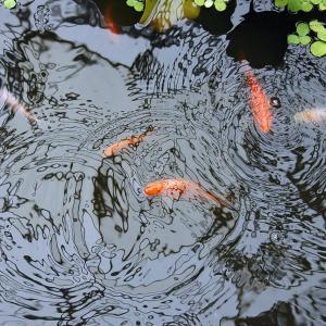 英単語「pond」ってどんな意味? ゼロから英語を学ぼう!!