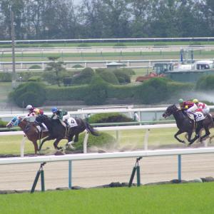 中山ダ1800m(2歳戦)種牡馬別ランキング