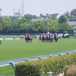 <小倉記念 傾向>キャリア11~20戦の馬に注目!