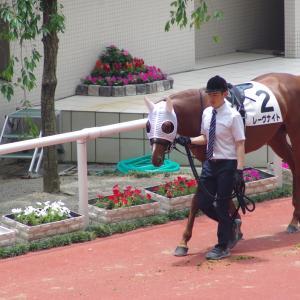 小倉芝1200m(2歳戦)種牡馬別ランキング
