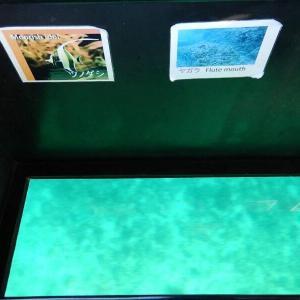 Goto石垣島3-5川平湾グラスボード