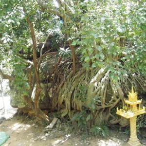 カンボジア3-7奇岩と川底の千本リンガと…@プノン・クーレン【過去編】