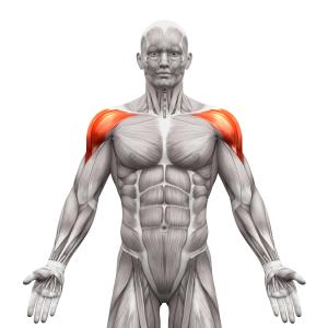 筋トレ初心者におすすめの肩の筋トレ方法 フロントプレス