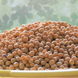 大豆の選別