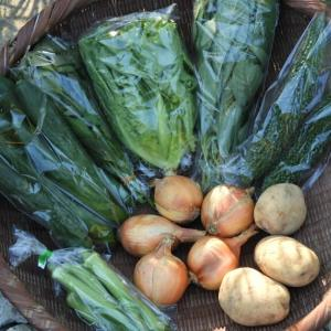 自然農の野菜セット