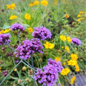 梅雨から夏へ紫陽花と向日葵