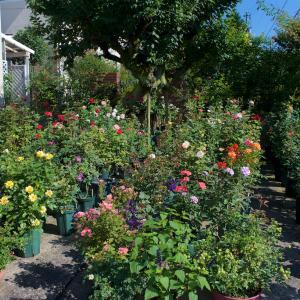梅雨が 長い 長い年の庭