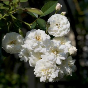 今日、きれいだと思う花を up します