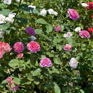 真夏に花がいっぱい 2