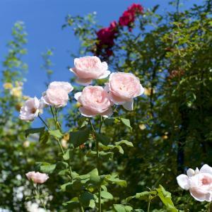 真夏に花がいっぱい 4