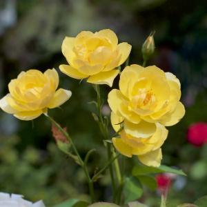 真夏に花がいっぱい 5