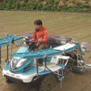田植え作業はあわてない。動画あり【水稲栽培技術・田植え体験】