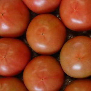 トマト栽培がもっと楽しくなる方法【摘果と日射】