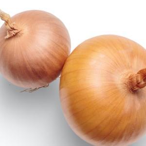 玉ねぎを春に育てて7月に収穫する最速の栽培方法と貯蔵方法【家庭菜園 たまねぎ栽培】