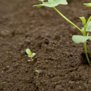 たい肥の作り方
