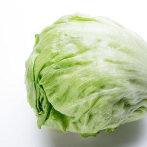 レタスの栽培方法【あっさり食べたいレタスを6~7月に収穫する】