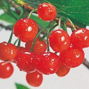 果実の調理法(食憲鴻秘)