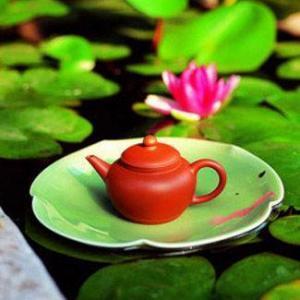 夏にさわやかなハスの葉茶