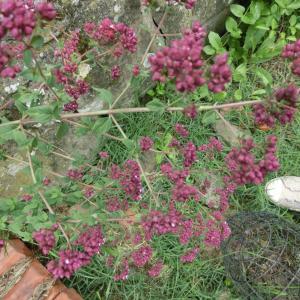 「ハナノナ」「leafsnap」「Plantnet」名前の知らない植物を調べる便利アプリ
