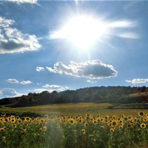 2020年夏・トスカーナの風景~その2・カゼンティーノのひまわり畑