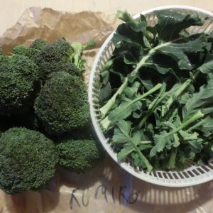 捨てずに食べ尽くせ!安全で美味しい旬の野菜