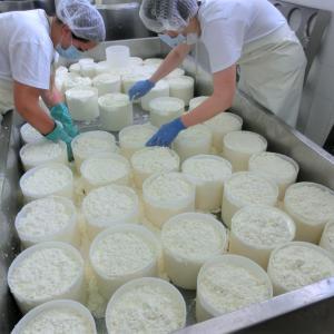 オーガニック羊乳チーズを存分に楽しむ