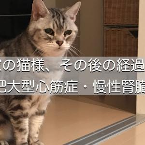 我が家の猫様、その後の経過と介護【肥大型心筋症・慢性腎臓病】