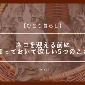 【ひとり暮らし】ネコを迎える前に知っておいて欲しい5つのこと