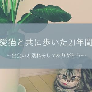 愛猫と共に歩いた21年間~出会いと別れそしてありがとう~
