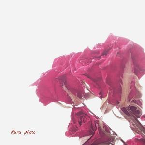 好きなタイプ‥『 詩的な日常‥Photoエッセイ 』