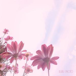 *.゚キリトル‥カンジル。*.゚『 詩的な日常 』photoエッセイ