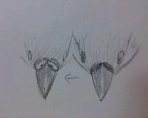 鳥の鼻毛と口毛についての考察