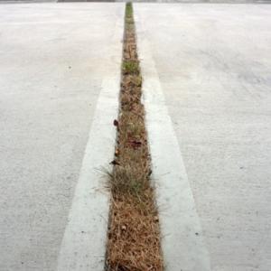 駐車場コンクリート目地の芝をやり替えました
