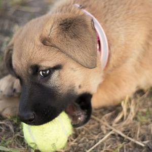 犬の嚙みグセが治らない?しつけ教室いらずのアロマスプレーがある!