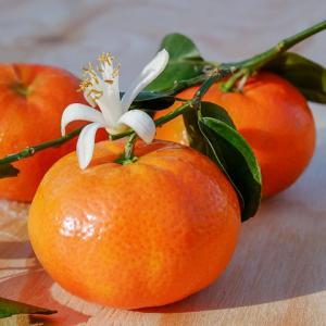 ネロリ精油(アロマオイル)の効果効能とは|香水にも使われる人気の香り?