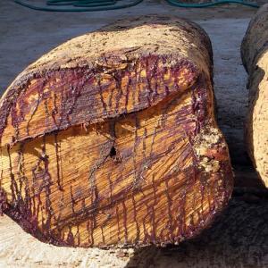 ローズウッド精油の効果効能|販売してる!?木と葉に成分の違いは?アロマオイルのブレンドレシピも!