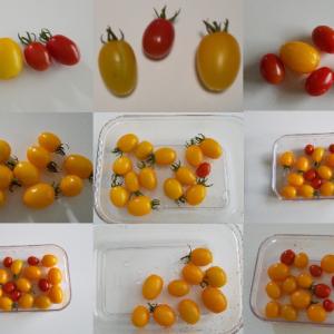 プランター菜園のまとめ(ミニトマトとパプリカとバジル)